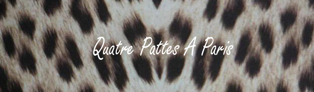 """""""4PParis"""" 's staff blog"""