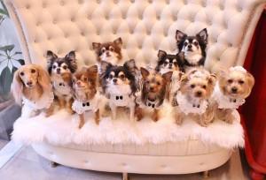 les_chiens-1